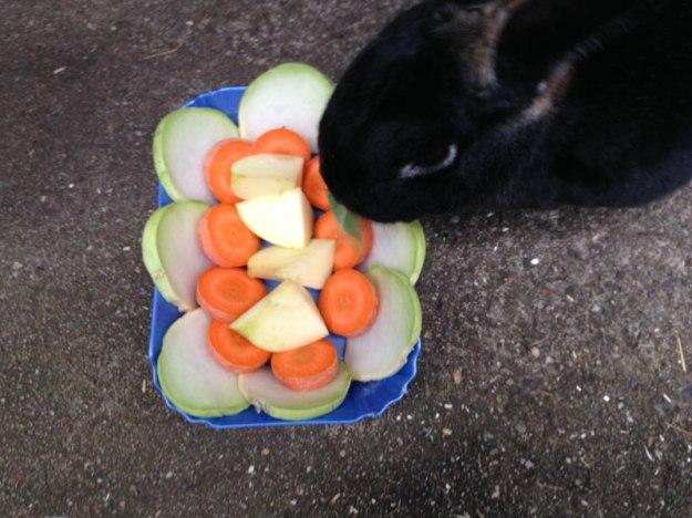 kaninchenmandala