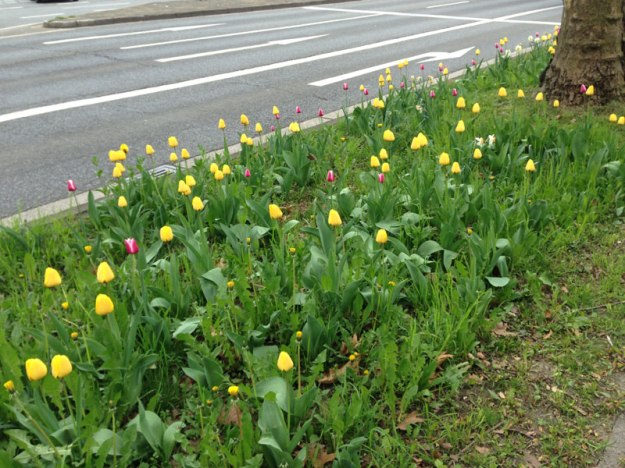 strassen-tulpen