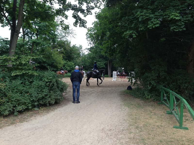 pferde-im-schlosspark