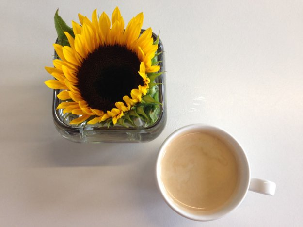 enthauptete-sonnenblume