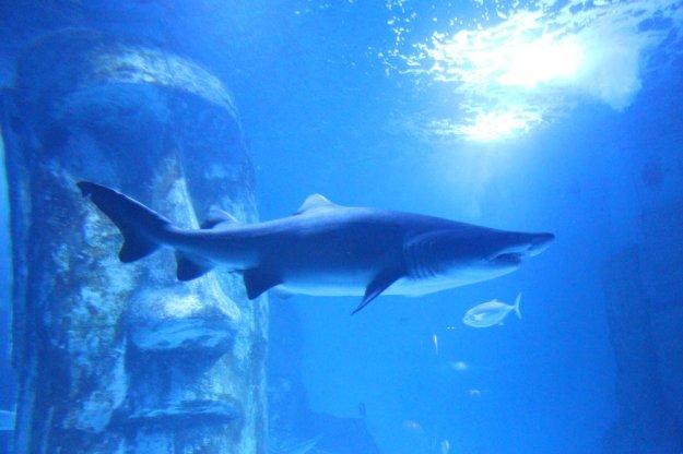 hai-im-aquarium