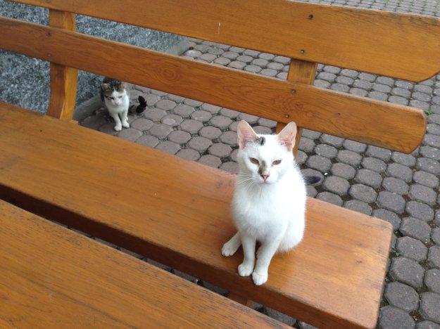 Katzenbegruessung