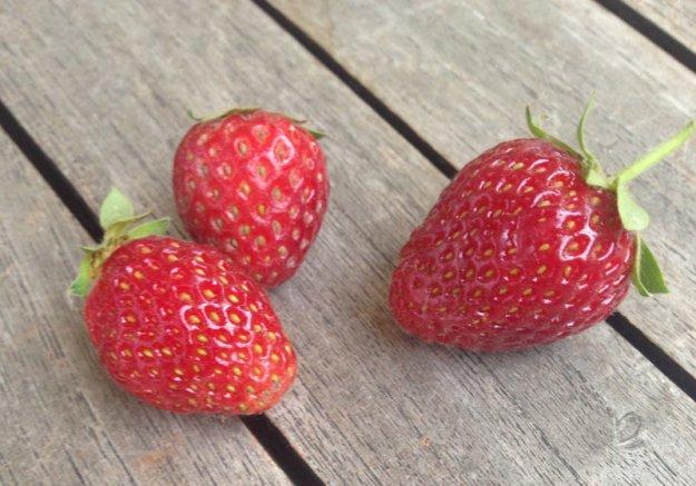 erdbeeren-aus-eigenem-anbau.jpg