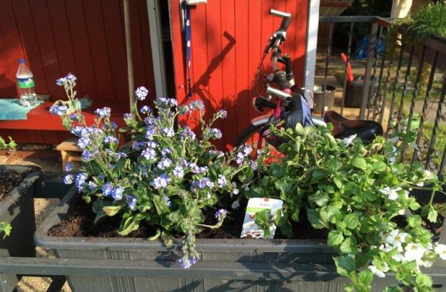 balkonpflanzen.jpg
