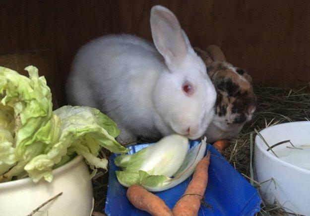 kaninchen-fruehstueck.jpg