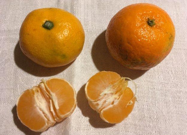 mandarinen-satsumas.jpg