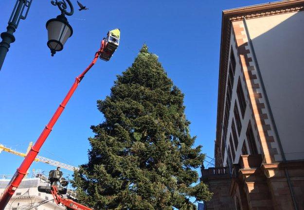weihnachtsbaum-wird-geschmueckt