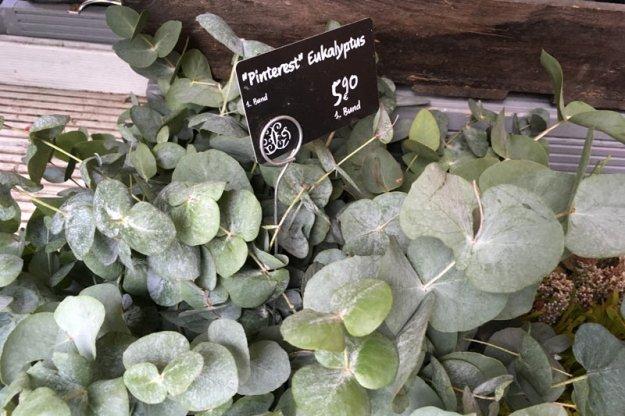 pinterest-eukalyptus.jpg