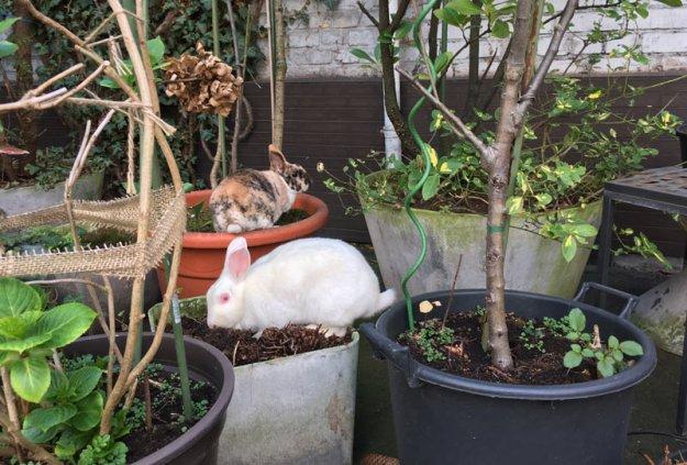 kaninchen-hofgang