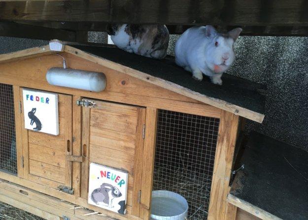 kaninchen-lieblingsplatz
