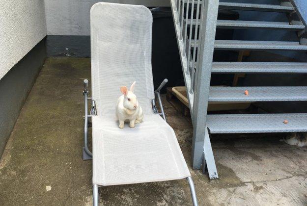 kaninchen-auf-dem-stuhl