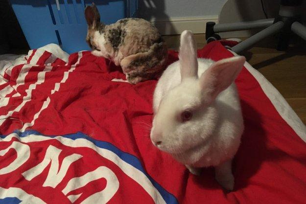 kaninchenbesuch