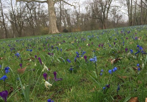blaue-blumen-im-park